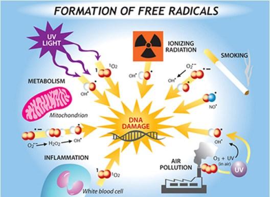Resultado de imagem para free radical uv food pollution