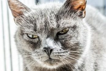 cats like customers?