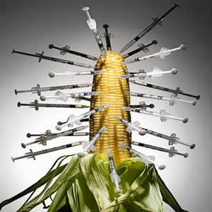 Los dos futuros de la alimentación y la agricultura