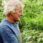 El mercado del cannabis en Holanda se está enterrando a la clandestinidad