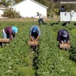 Combatiendo la esclavitud en las plantaciones