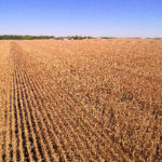 illinois-farm-fields-corn-harvest-selling-farm-public-auction