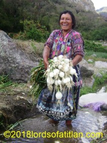 Onion harvest, Panajachel