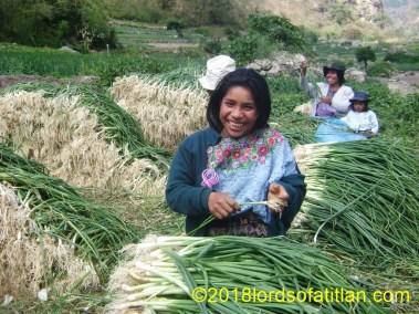Lesbia in onion harvest, Panajachel