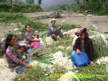 Family from Tierra Linda, onion harvest, Panajachel