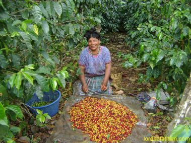 Mari Luz selecting coffee, Finca Pampojilá