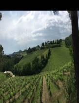 Udsigten fra Fattoria di Fugnano ind over San Gimignano