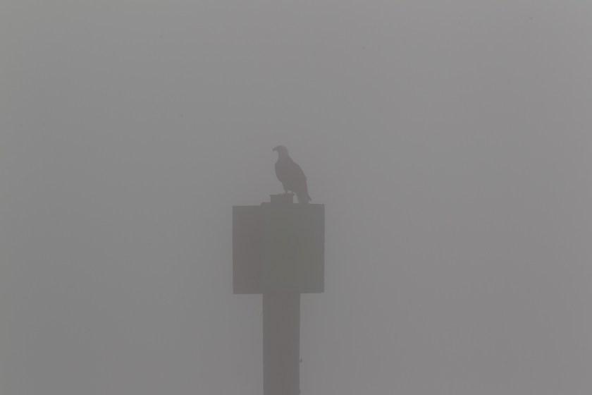 FogEagle