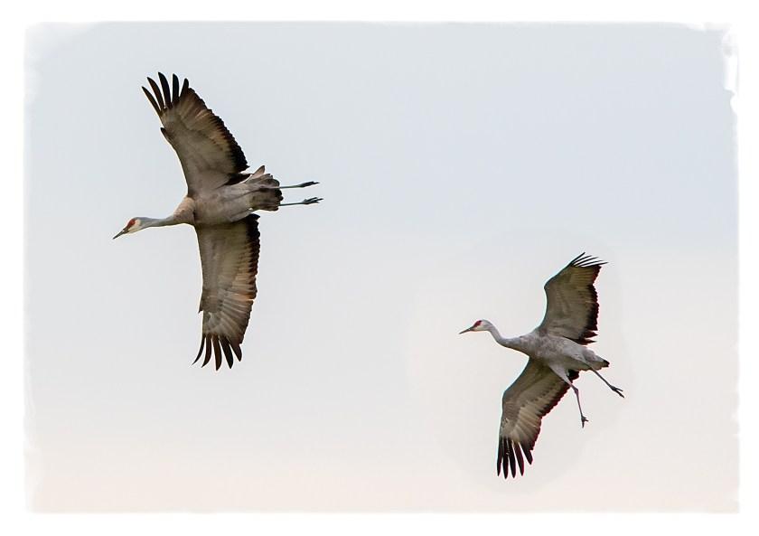 cranesflyng3