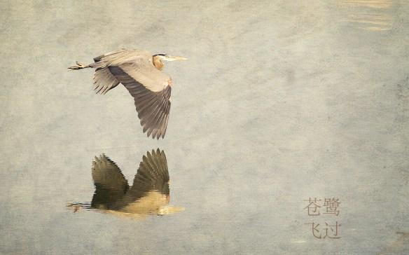 HeronFlyOver