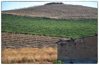 I colori della campagna siciliana in estate