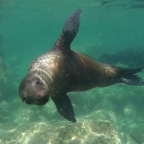 sealcloseup buceo loreto