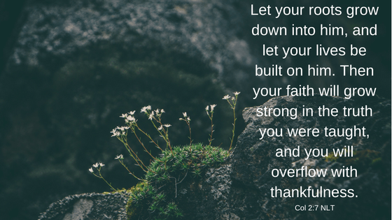 Let your roots grow down into him, and let your lives be built on him. Then your faith will grow strong in the truth you were taught, and you will overflow with thankfulness. Col 2:7