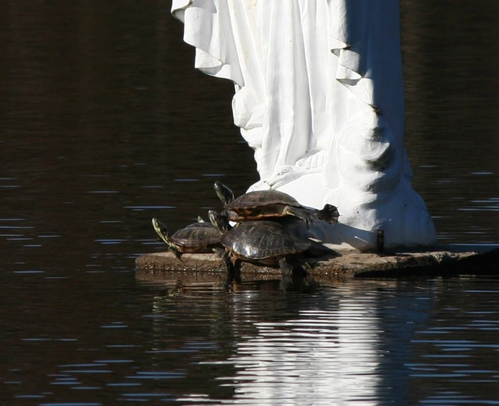 Turtles basking at the foot of Mary
