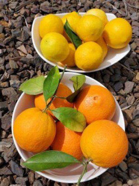 Citrus Fruits Boost Immunity