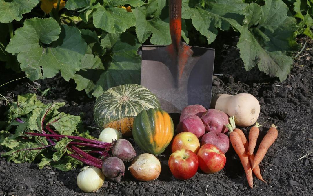 How to Design an Edible Garden