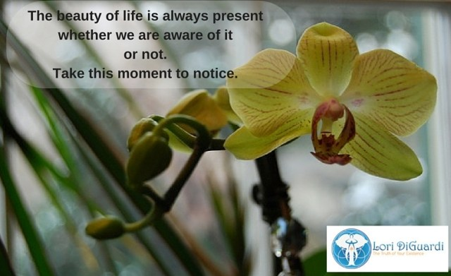 the beauty of life is always present whether we are aware of it or not
