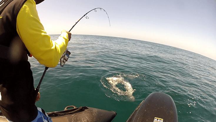 pêche au requin 2017 5