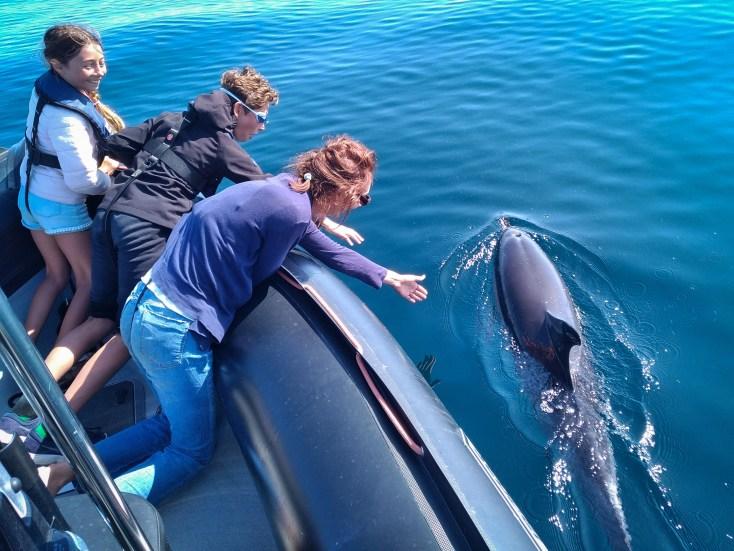 ballade avec les dauphins de groix