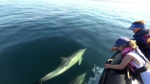 observations de dauphins dans le morbihan