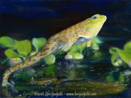 "Paintings by Lori Garfield : Leap Frog, 12"" x 9"" Original Oil Painting of a frog leaping on the water's surface of a lily pond by artist Lori Garfield, Medford Oregon"