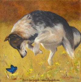 """Paintings by Lori Garfield : Pounce, 14"""" x 14"""" Original Oil Painting of a coyote pouncing on a brightblue butterfly with golden and amber hues in the background by artist Lori Garfield, Medford Oregon"""