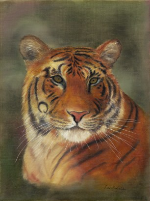 Paintings by Lori Garfield : Tiger, portrait of a tiger. Original Oil Painting by artist Lori Garfield, Medford Oregon