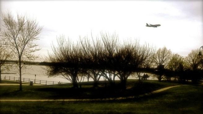 crepuscular trees