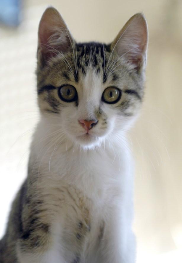 bouchon chat