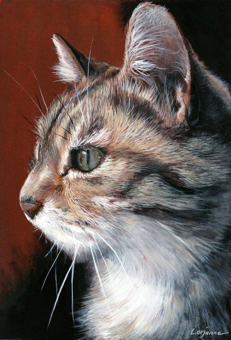 chat tricolore gouache