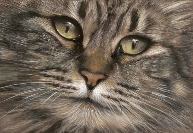 chat doux regard gouache