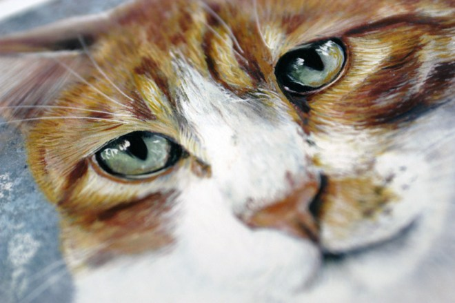 chat roux closeup