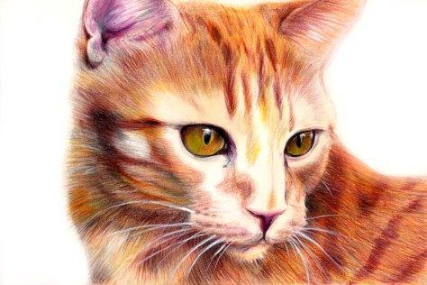 chat crayons de couleur