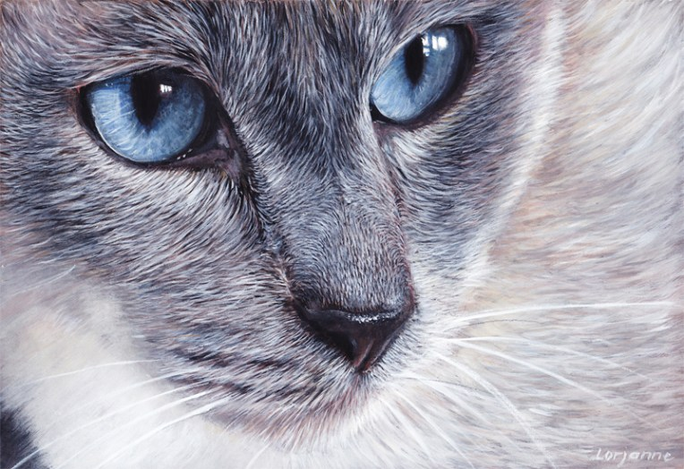 chat yeux doux