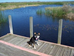 Kuma recalls his visit to Brazoria Wildlife Refuge in Texas