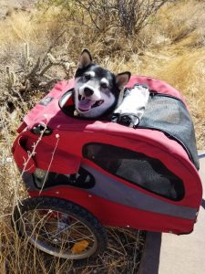 Kuma goes biking on the Sonoran Parkway path