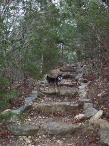 Kuma loves hiking up