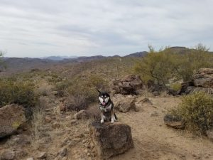 Kuma hikes in the Tonto National Forest