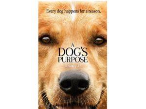 Kuma watches the movie A Dog's Purpose