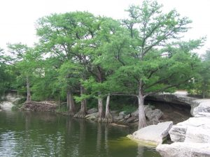 Kuma explores McKinney State Park in Texas