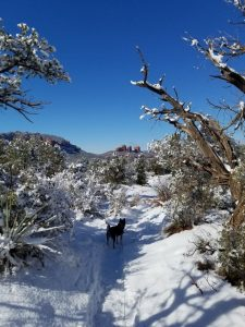 A great snow day in Sedona