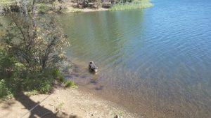 Kuma takes a dip