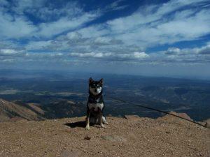 Kuma on top of Pikes Peak