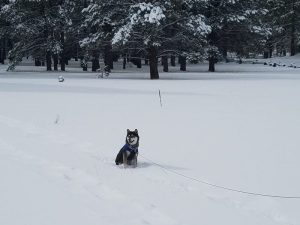 Kuma finds snow in Flagstaff