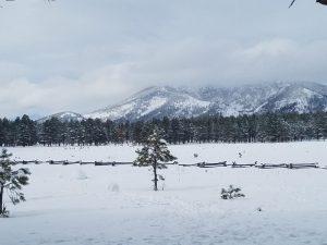 Snowy day in Flagstaff