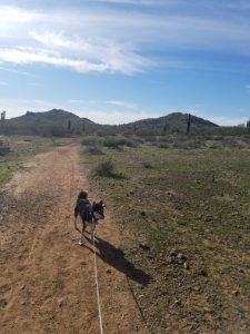 Kuma on the trail