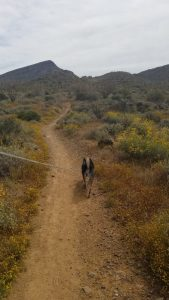 Maricopa trail west