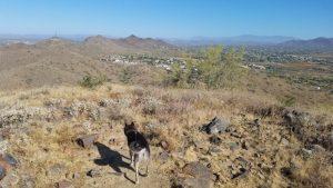 Kuma enjoys great views