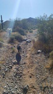 Kuma on a new trail