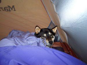 Kuma gets cold camping